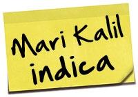 categorias-mari-kalil-indica