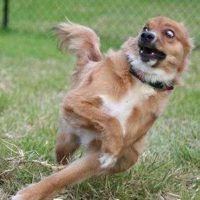 BICHO cachorro Cruz Credo