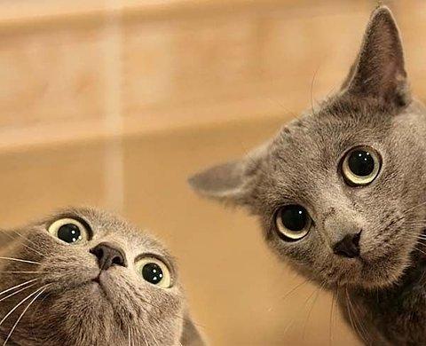 BICHO - Gatos assustados