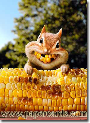desenho esquilo com milho
