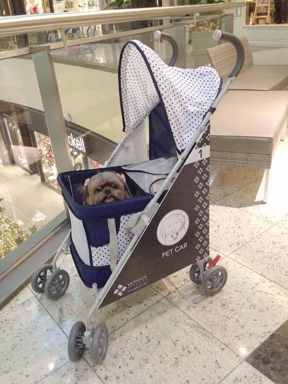 00 Matilda - Pet Car - Moinhos Shoppping (3) (2)