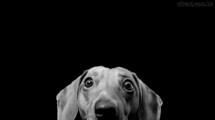 Papel-de-Parede-Cachorro-em-Preto-e-Branco_1366x768-752x422
