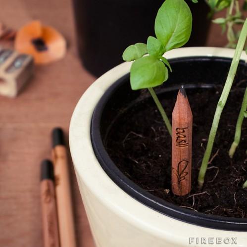 sprout-pencil-lapis-ervas