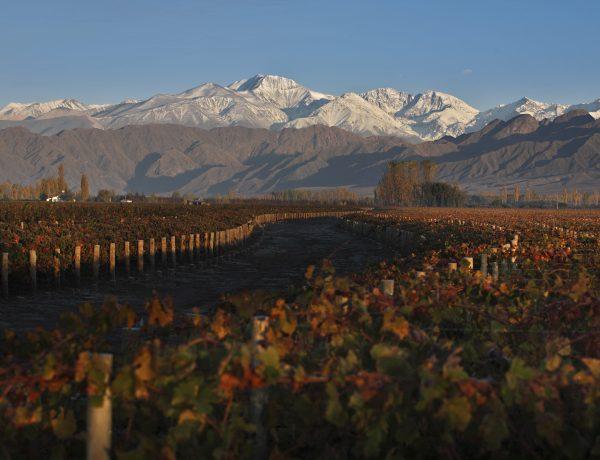 Viñedos relevamiento WOFA Wines of Argentina
