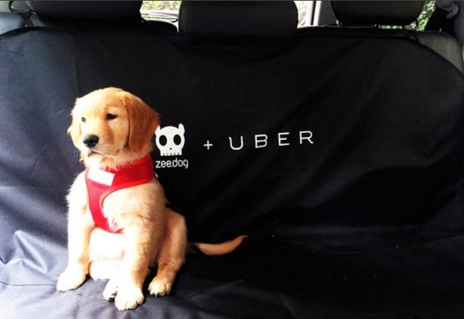 Uber-transporte-PET