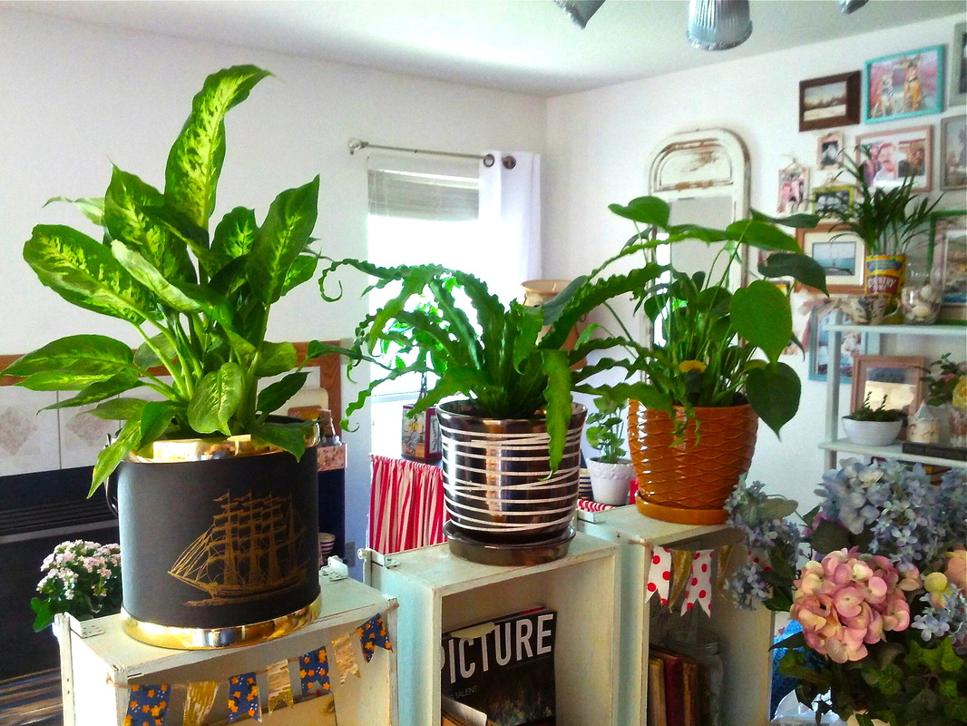 Aprenda a manter as plantas lindas e irrigadas durante as suas f rias mk Plants for room