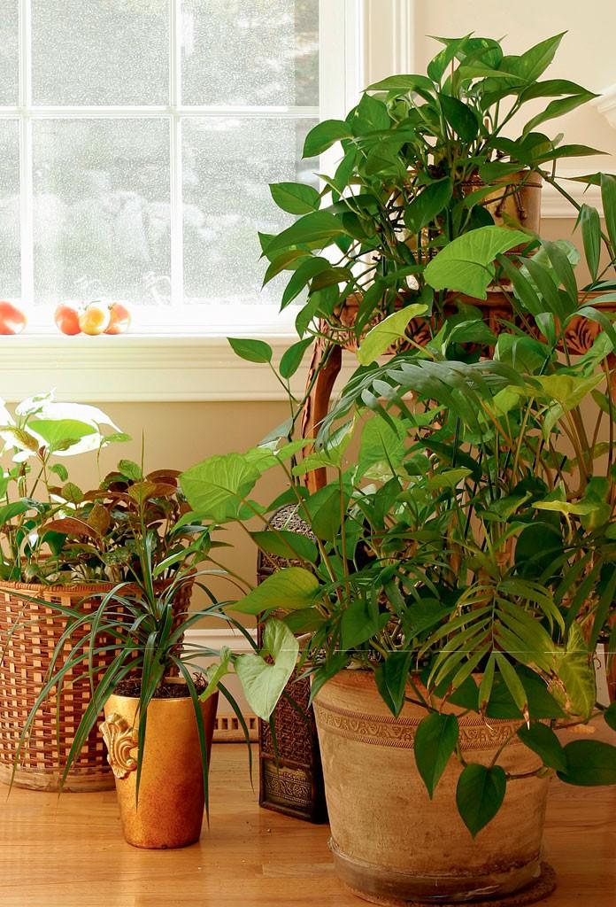 plantas-dentro-de-casa-que-especies-usar