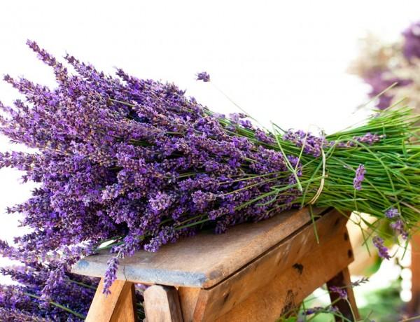 lavanda-verdadeira-alfazema-sementes-flor-para-mudas-203601-MLB20349343404_072015-F