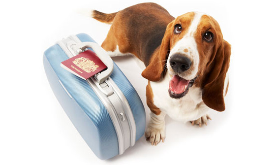 traveling-with-your-pet