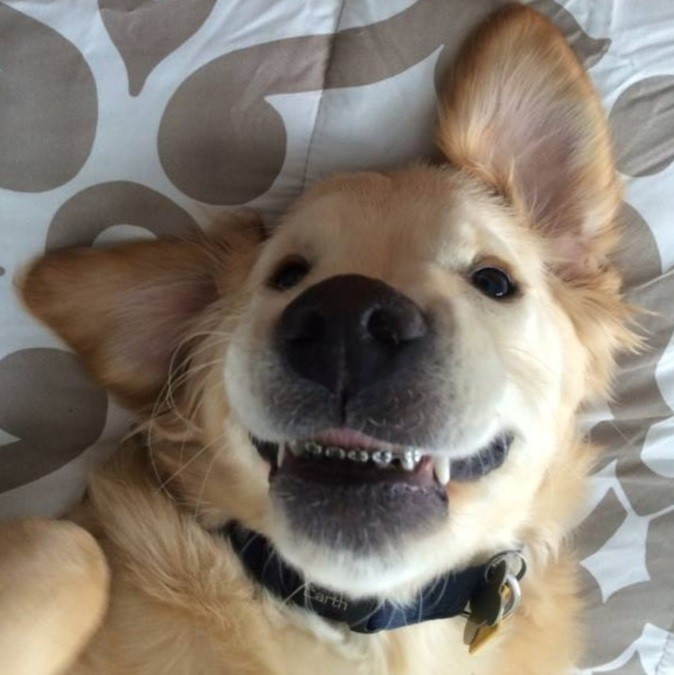 blog_wesley_dog