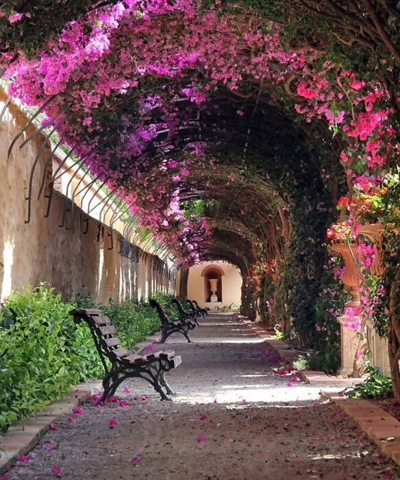 020Tunel-de-Flores-Valencia-Espanha