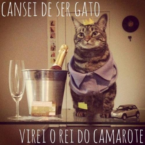 o-gato-chico-virou-sucesso-no-facebook-por-causa-de-suas-diversas-caracterizacoes-1384885820052_500x500