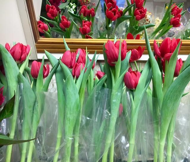 z-tulipa