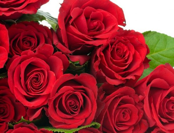 red-rose-flowers-wallpapers-hd