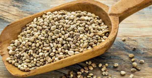 semente-canhamo