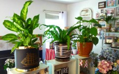 living-room-Introduce-tall-potted-plants-03